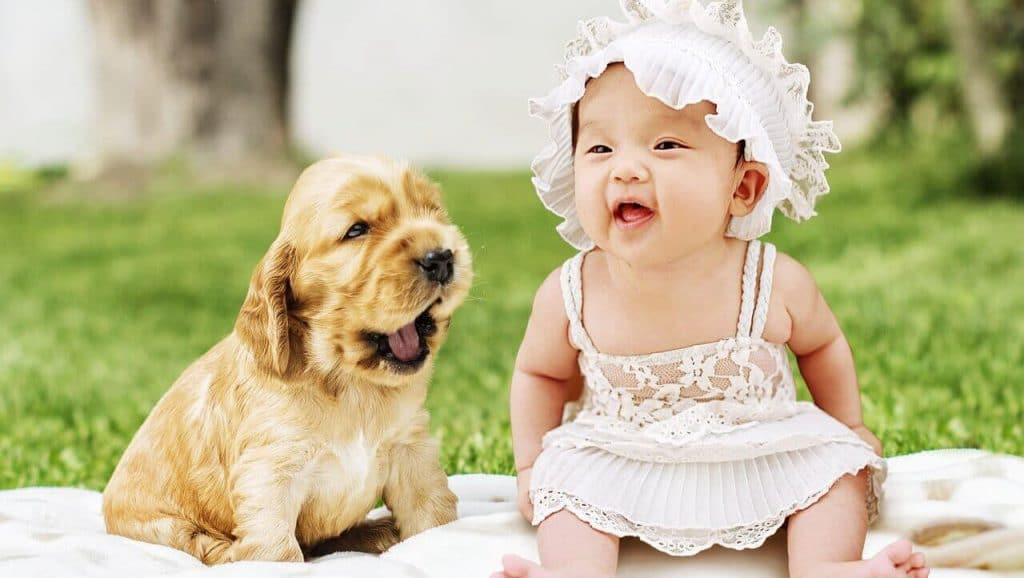 How to Prepare Your Dog for a Baby