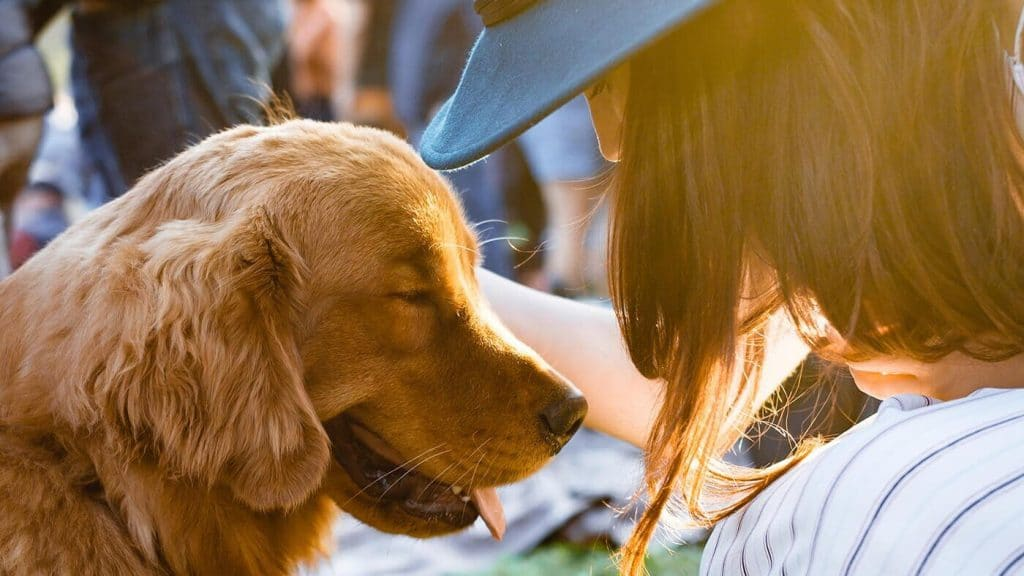 Are You Ready for a Dog? Here's the Checklist to Find Out.