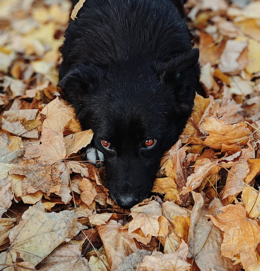 Protecting Your Dog From the 7 Most Common Fall Hazards