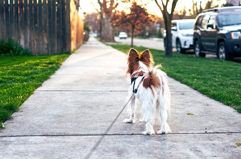 How to Have an Awesome Sniffing Walk for Your Dog
