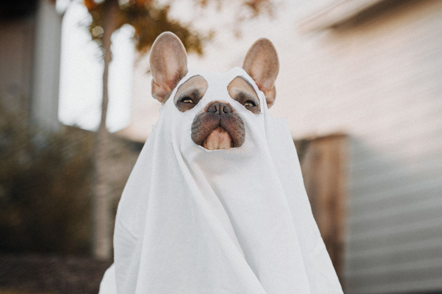 7 Dog Halloween Costume Ideas Perfect for 2019