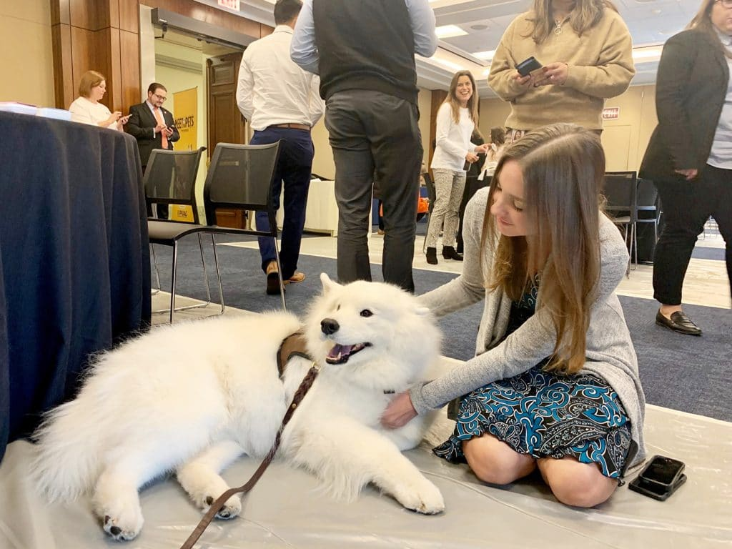 Dogs at Impeachment Hearing Pet Partners 2