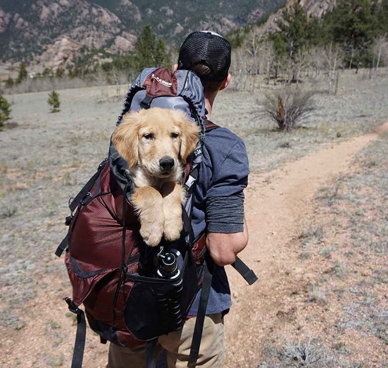 dog and person hiking