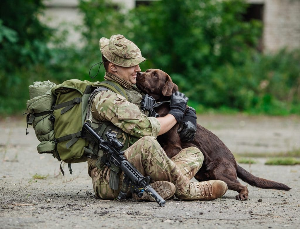 5 Hero Veteran Dogs Who Have Served Our