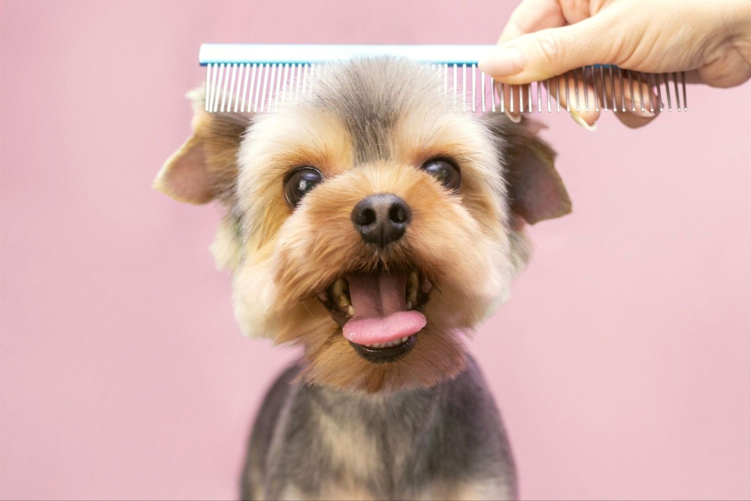 Finding the Perfect Dog Groomer for Your Furry