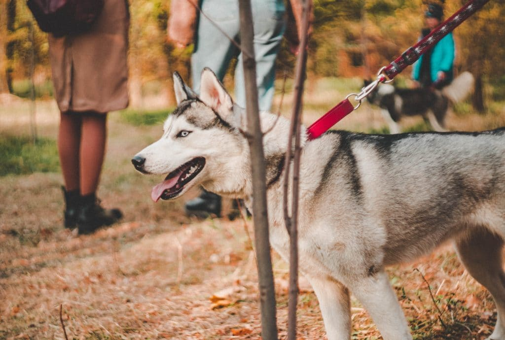 activities to do with your dog in the fall