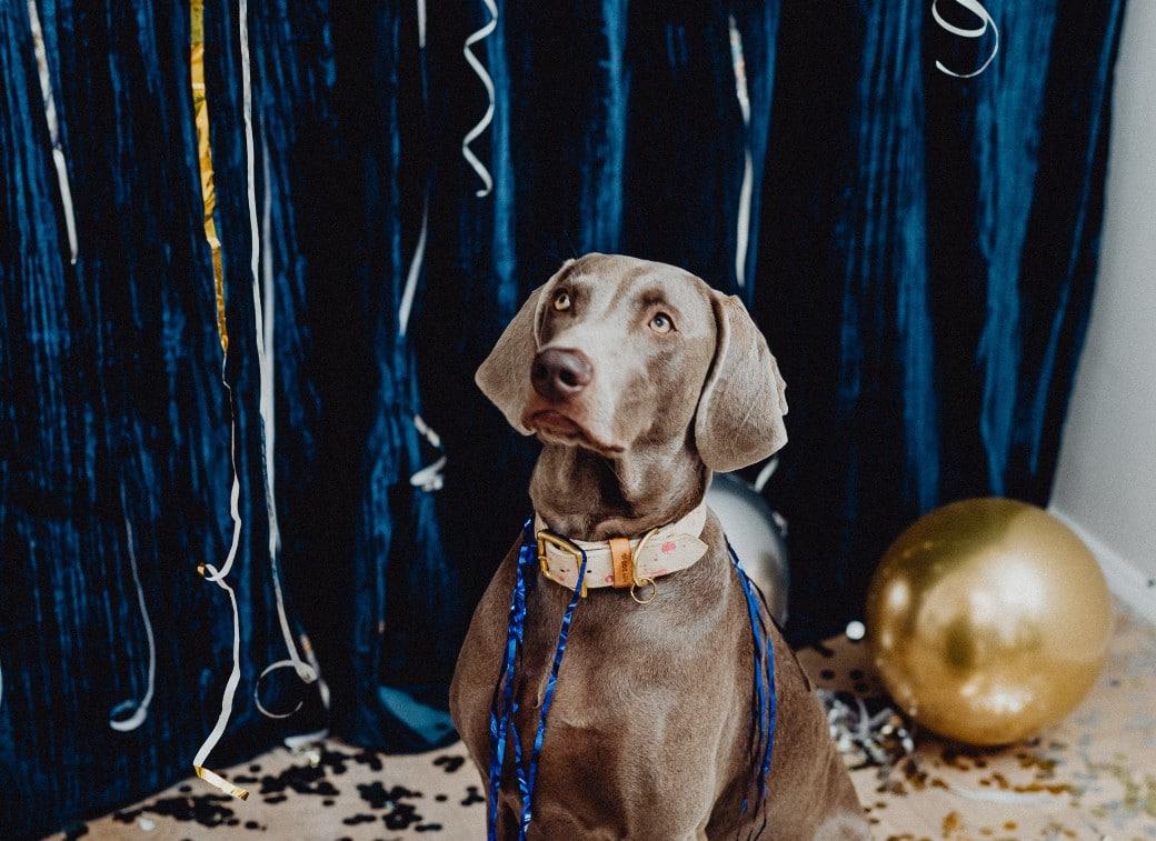 Keep Your Dog Safe While Celebrating New Year's Eve