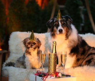 dogs at new year's party