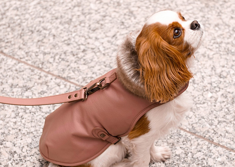 Keep Your Dog Warm With These Stunning Designer Jackets