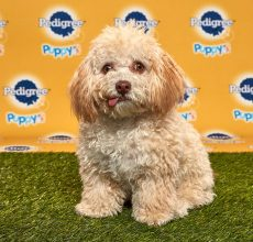 Huck-PBXVI Puppy Bowl
