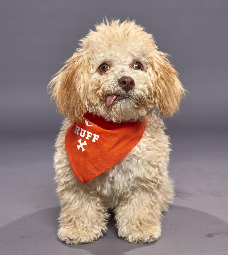 puppy for puppy bowl