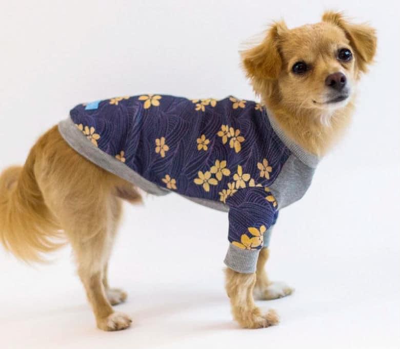 Le Chien Bleu Kimono Dog Pajamas