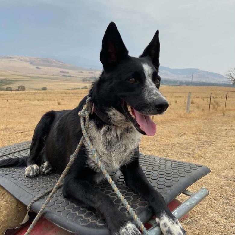 dog on truck