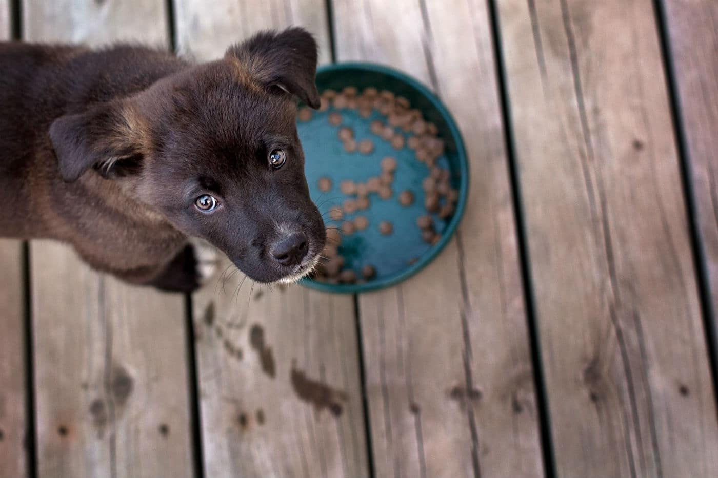 puppy and dog food