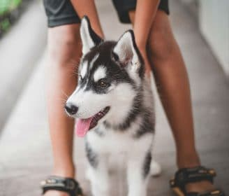 husky and owner