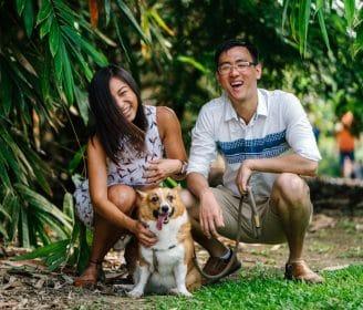 dog corgi couple