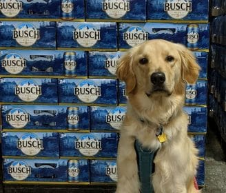 Busch Gives Away 3 Months' Worth of Beer for Those Who Foster or Adopt a Dog