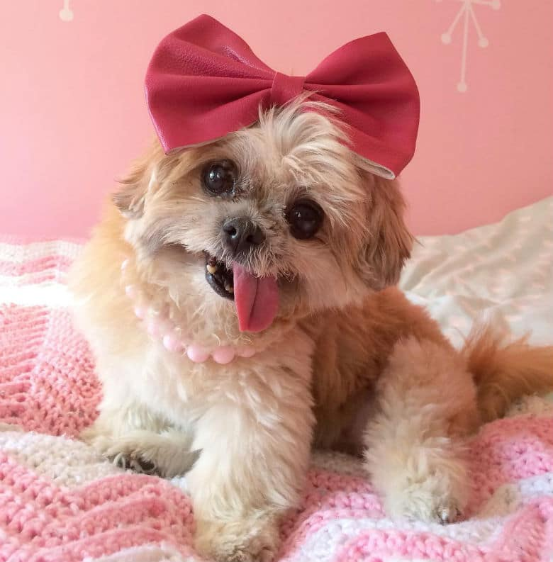 Marnie the dog passes away