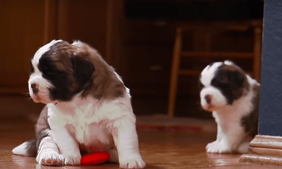 Animal Planet Is Streaming More Than 90 Hours of Puppies and Kittens