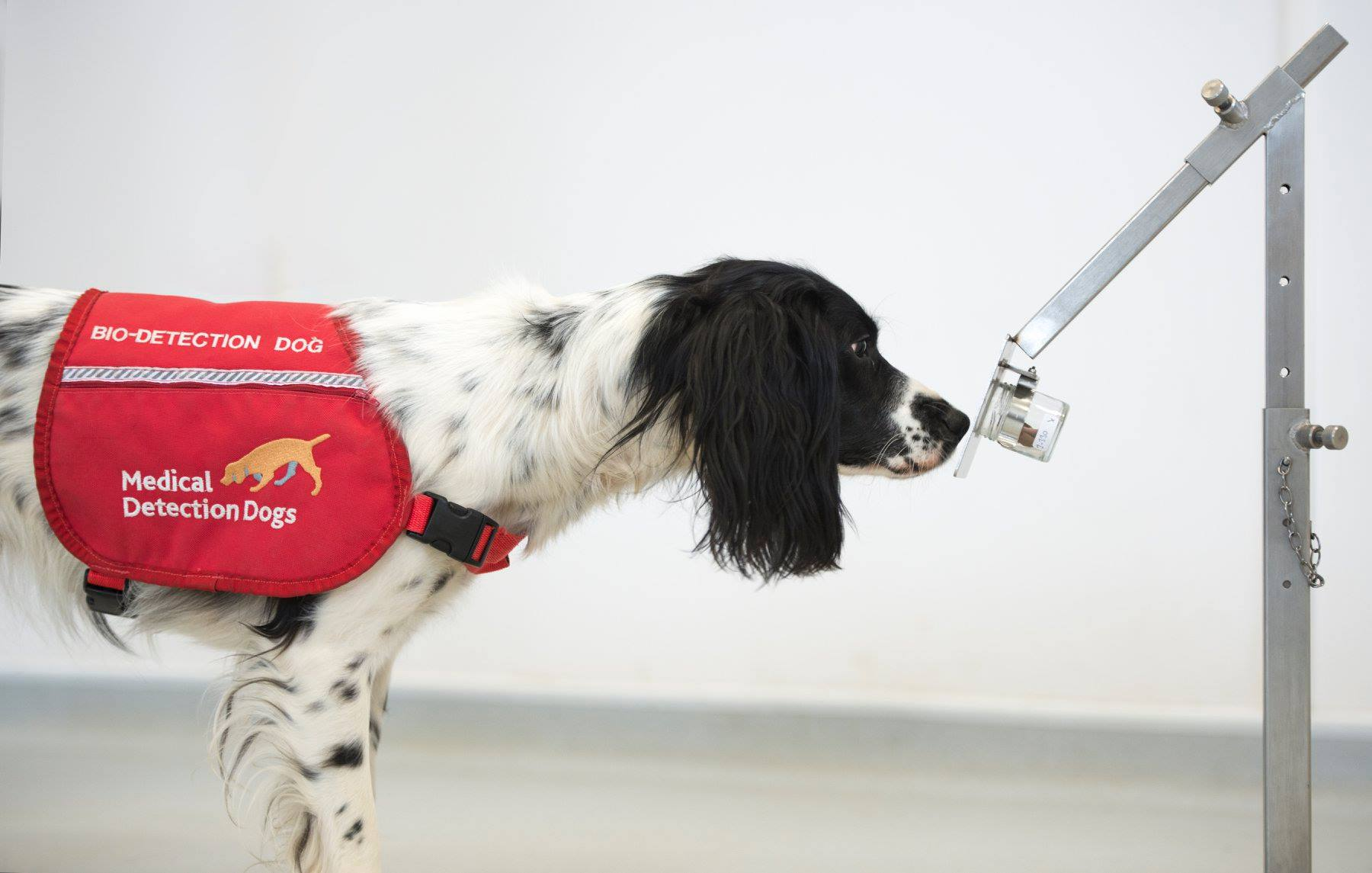 Could Dogs Sniff Out the Coronavirus?