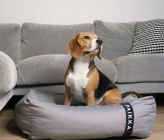 Paikka dog bed