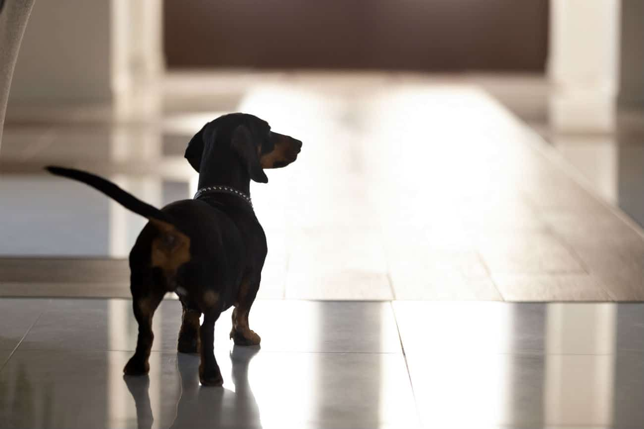 Emergency Planning for Your Dog's Care If You're Hospitalized for COVID-19