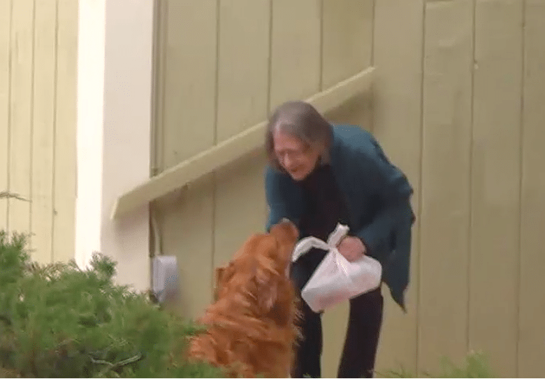 Woman Teaches Her Dog to Deliver Groceries to Neighbor in Quarantine