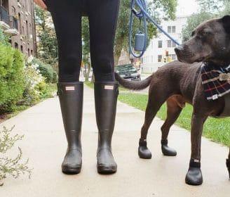 wagwear dog boots