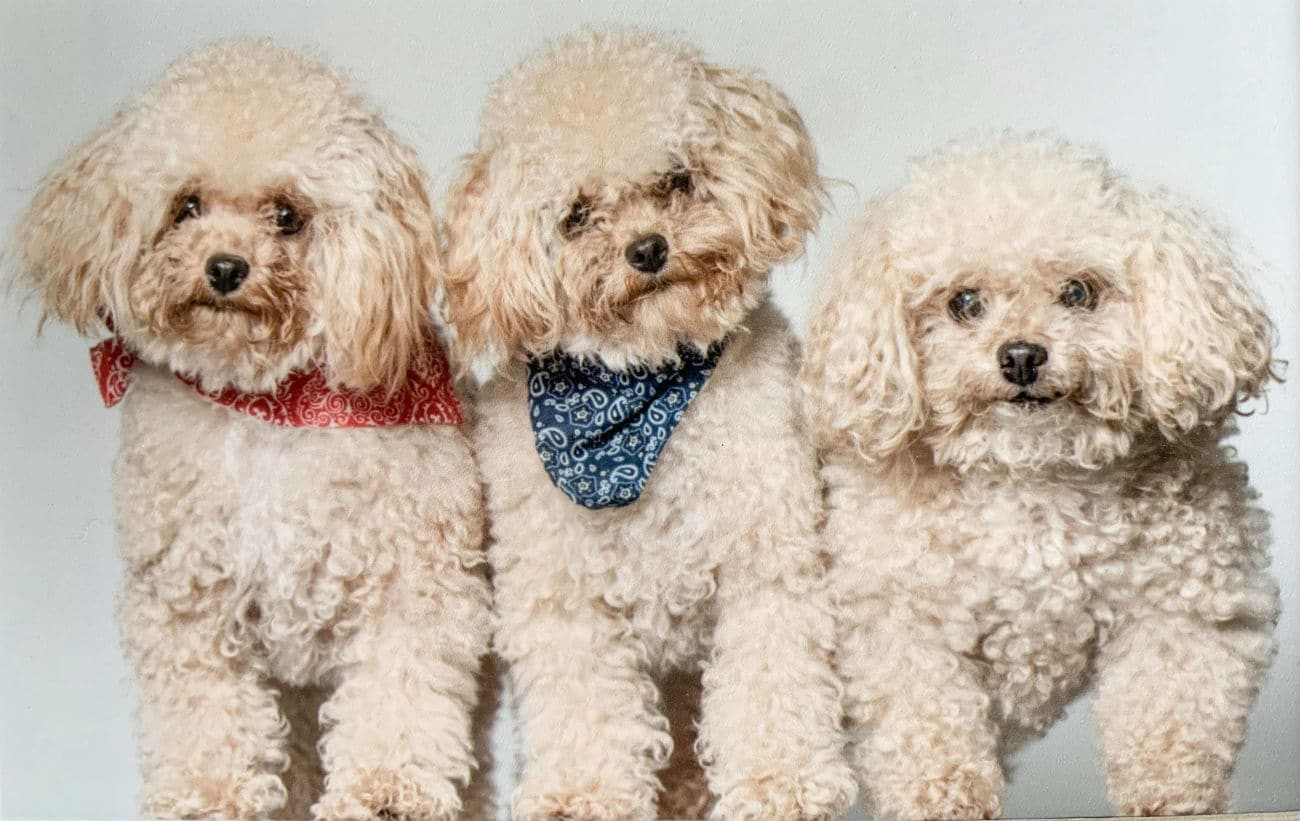 Inside the Controversial Yet Growing World of Dog Cloning