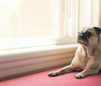 separation anxiety in dogs after coronavirus covid-19
