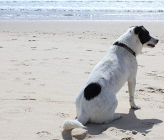 Yes Dogs Can Get Skin Cancer Here S What To Do About It This Dogs Life