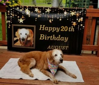 20-Year-Old Dog Celebrates Birthday, Is Now Believed to Be Oldest Golden Retriever in History