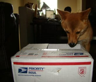 dog and mail carrier and usps