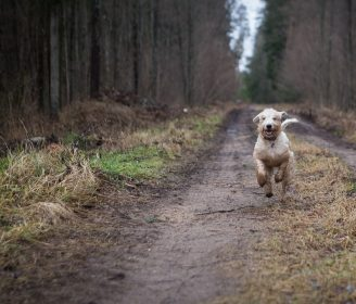 Can the Earth's Magnetic Poles Help Your Dog Take Shortcuts?