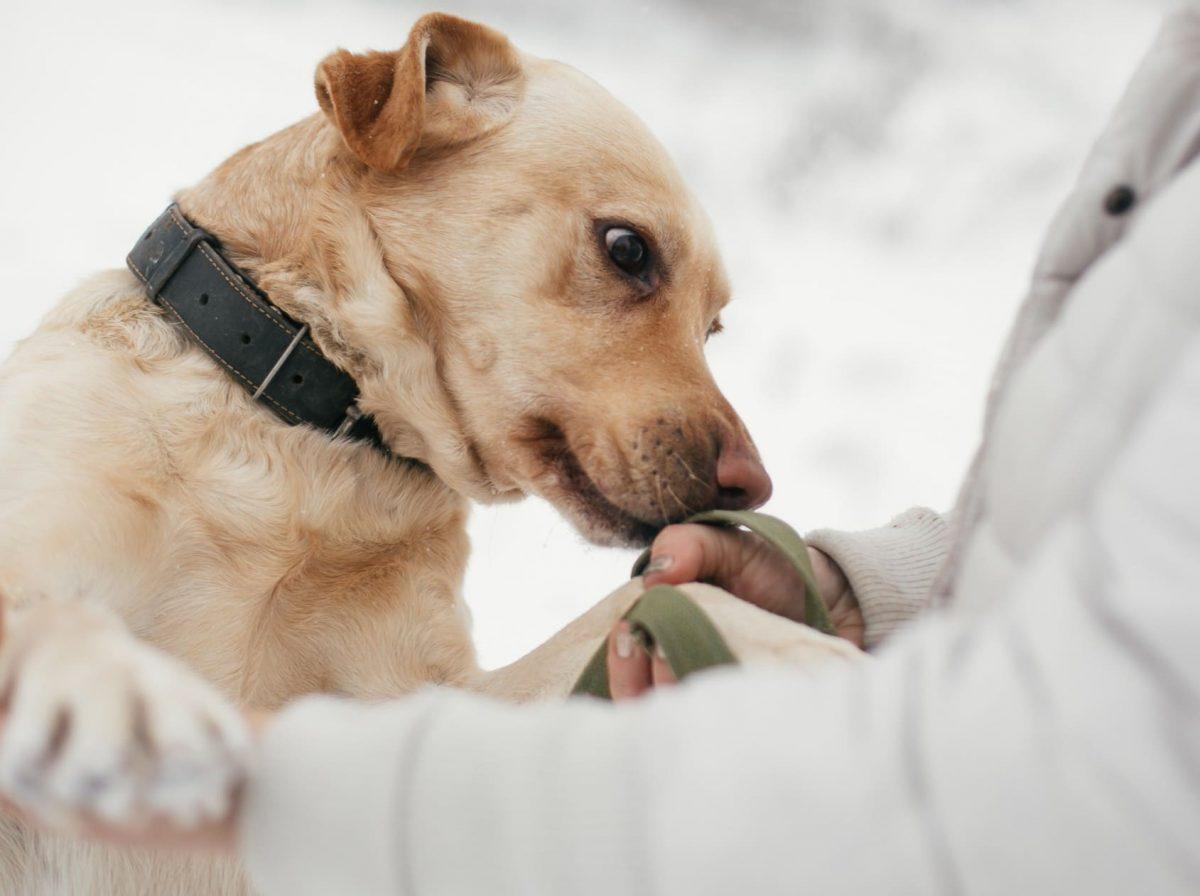 Researchers Find Dogs Can Sniff Out the Coronavirus 94 Percent of the Time