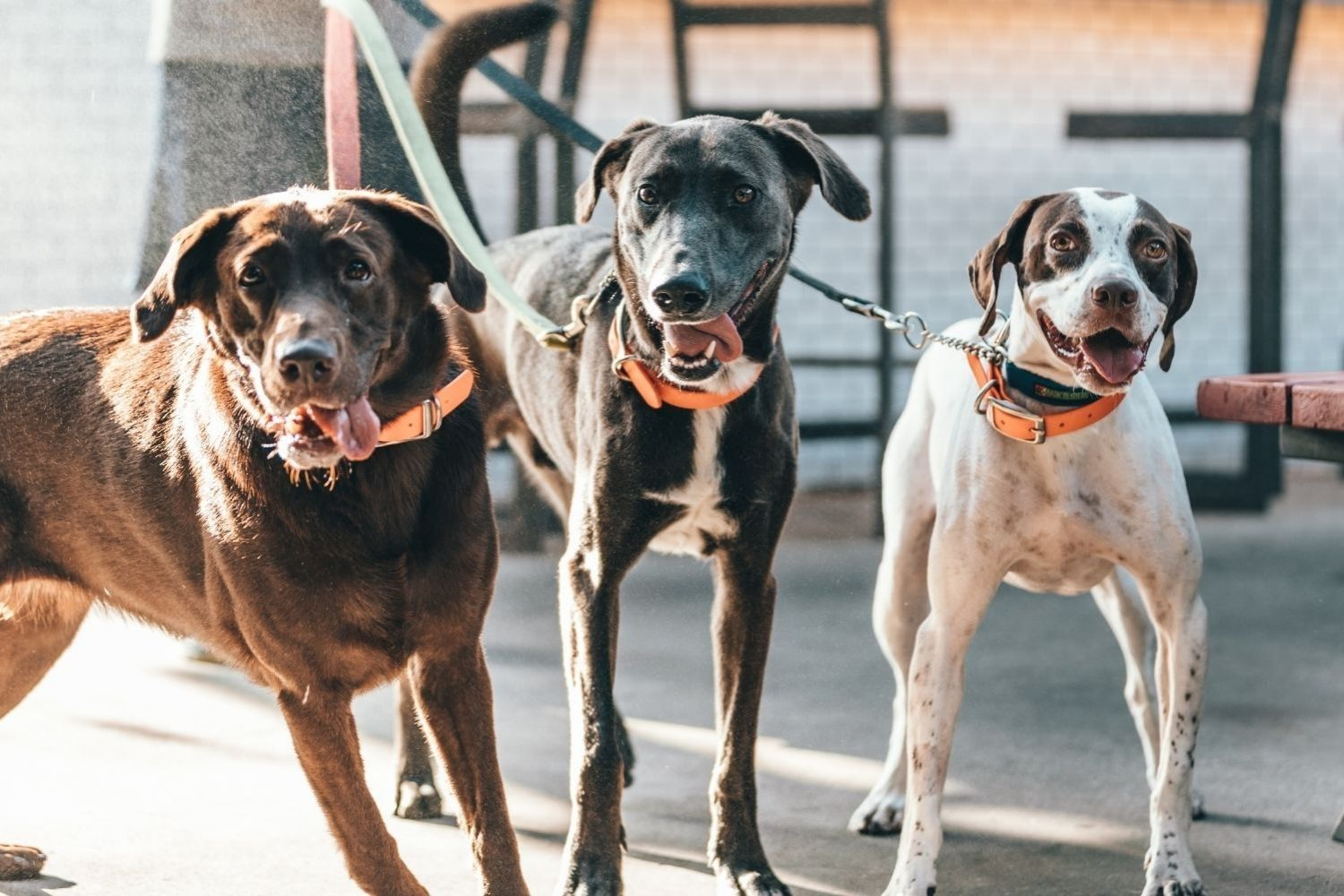 Everything You Need to Know About Your Dog Walker During COVID-19
