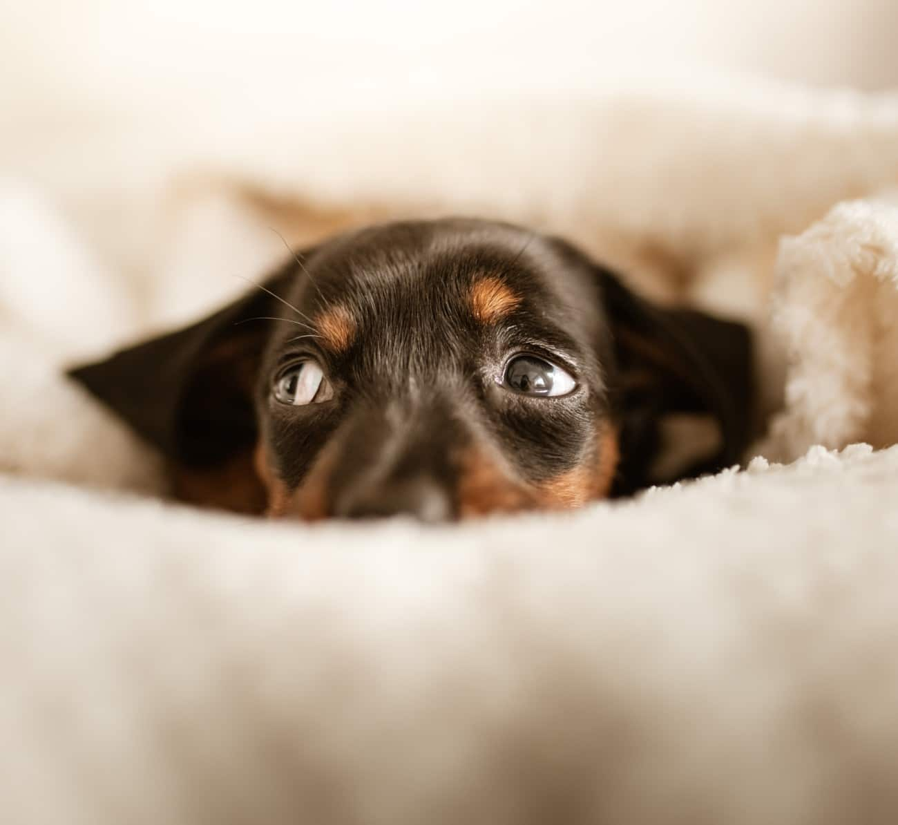 Can Dogs Be Introverts?