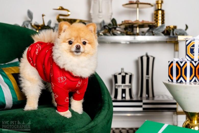 dog photoshoot tips