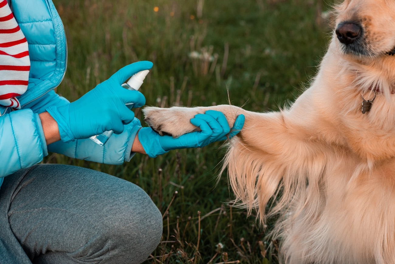 Hand Sanitizers Being Used on Dogs
