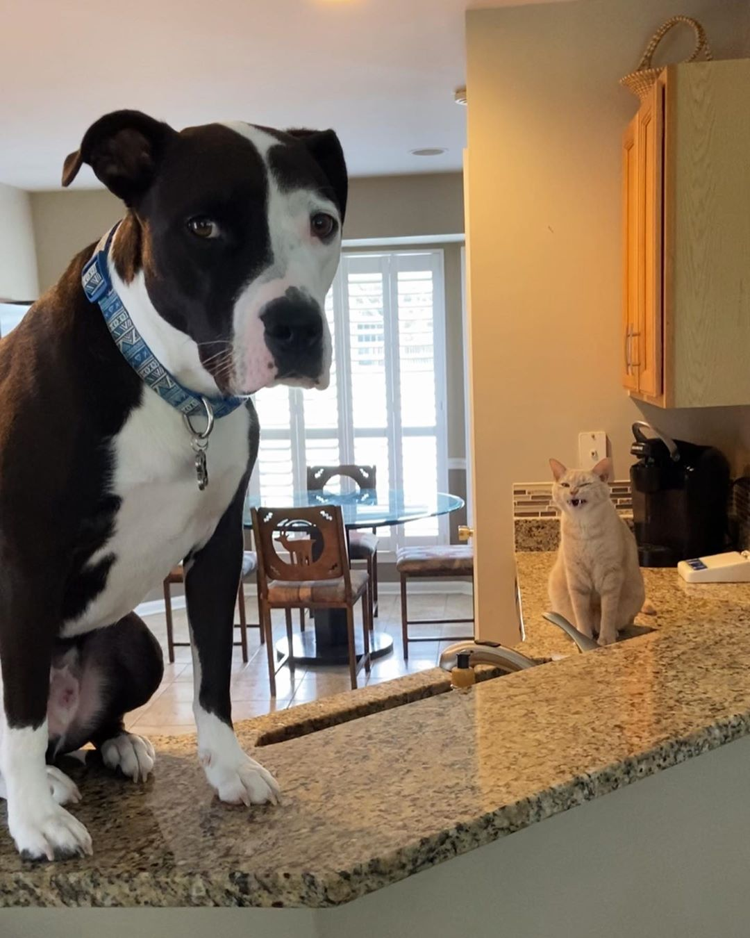 Meet the Dog Who Thinks He's a Cat
