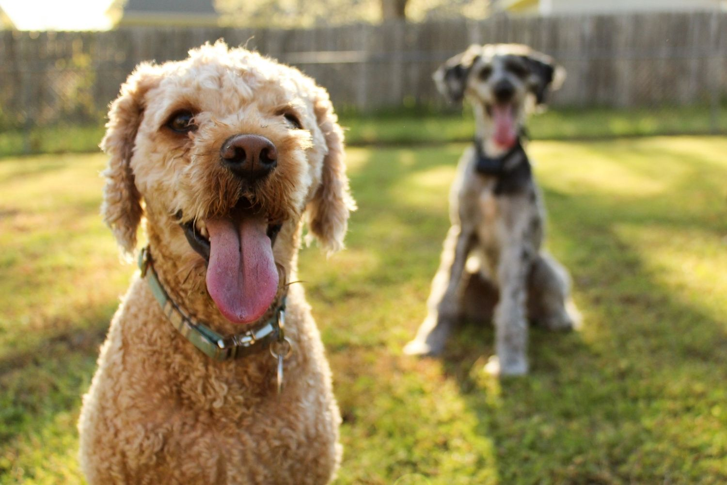 7 Natural Ways to Protect Your Dog From Mosquitoes in Your Backyard