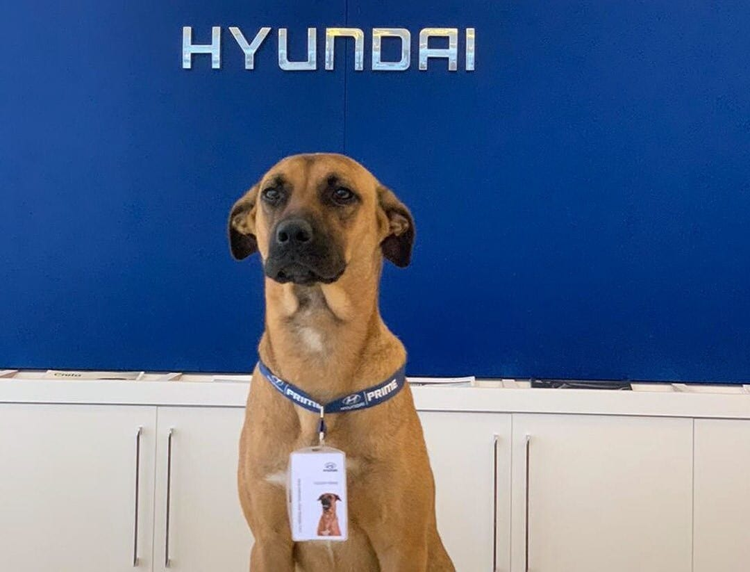 dog adopted by dealership
