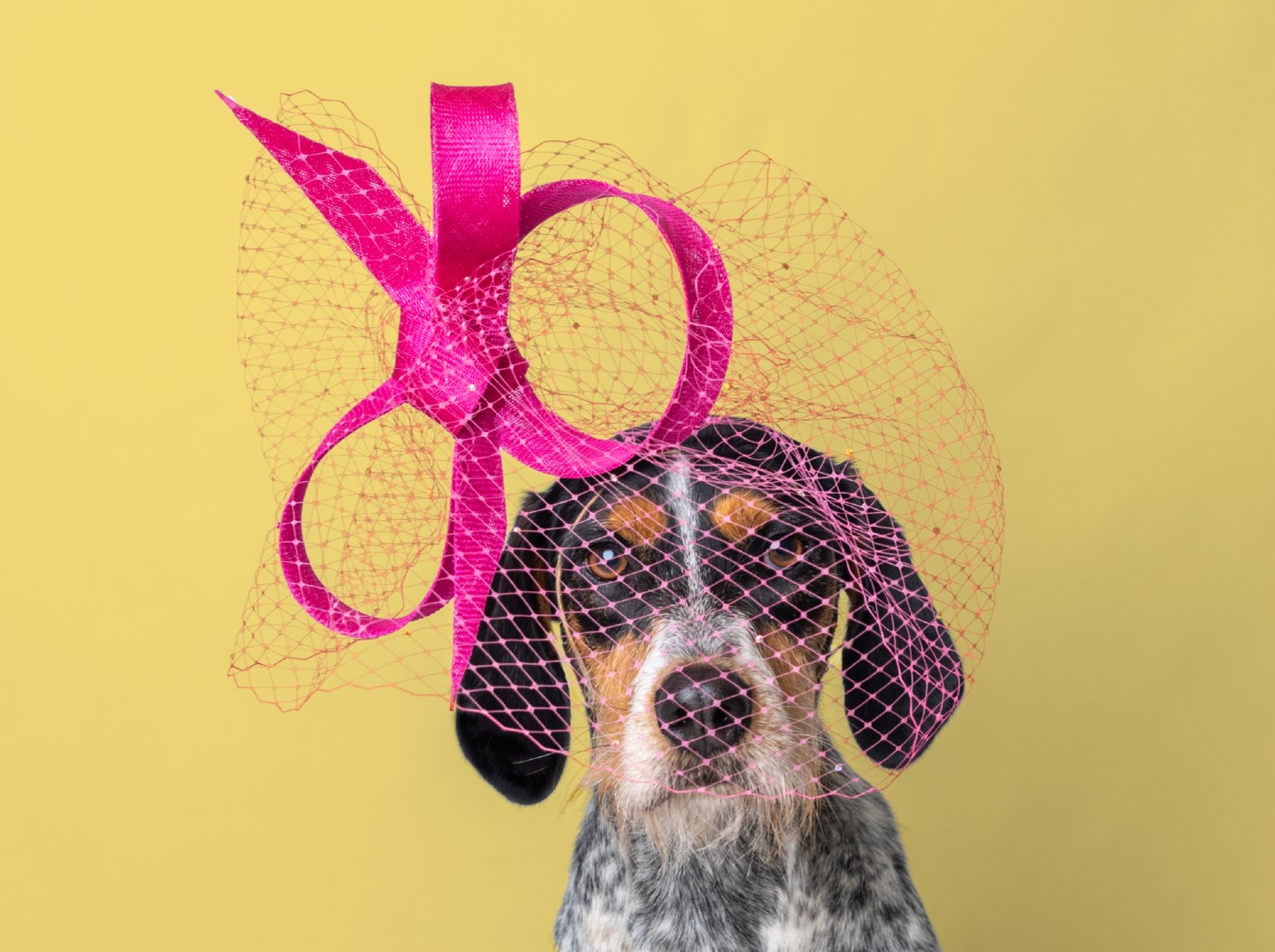 Hats Off: Celeb Milliner for Meghan Markle and Lady Gaga Creates Adorable Rescue Dog Calendar