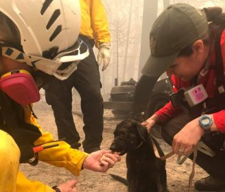 Puppy Discovered in Rubble After Wildfires Destroyed Community