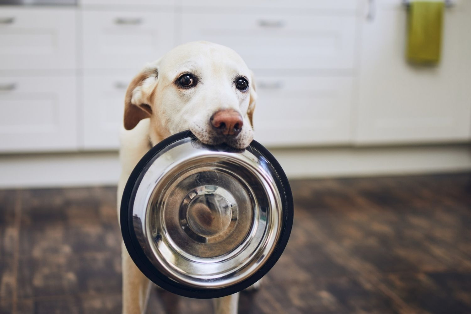 Meet the Guy Obsessed With Dog Food Recalls