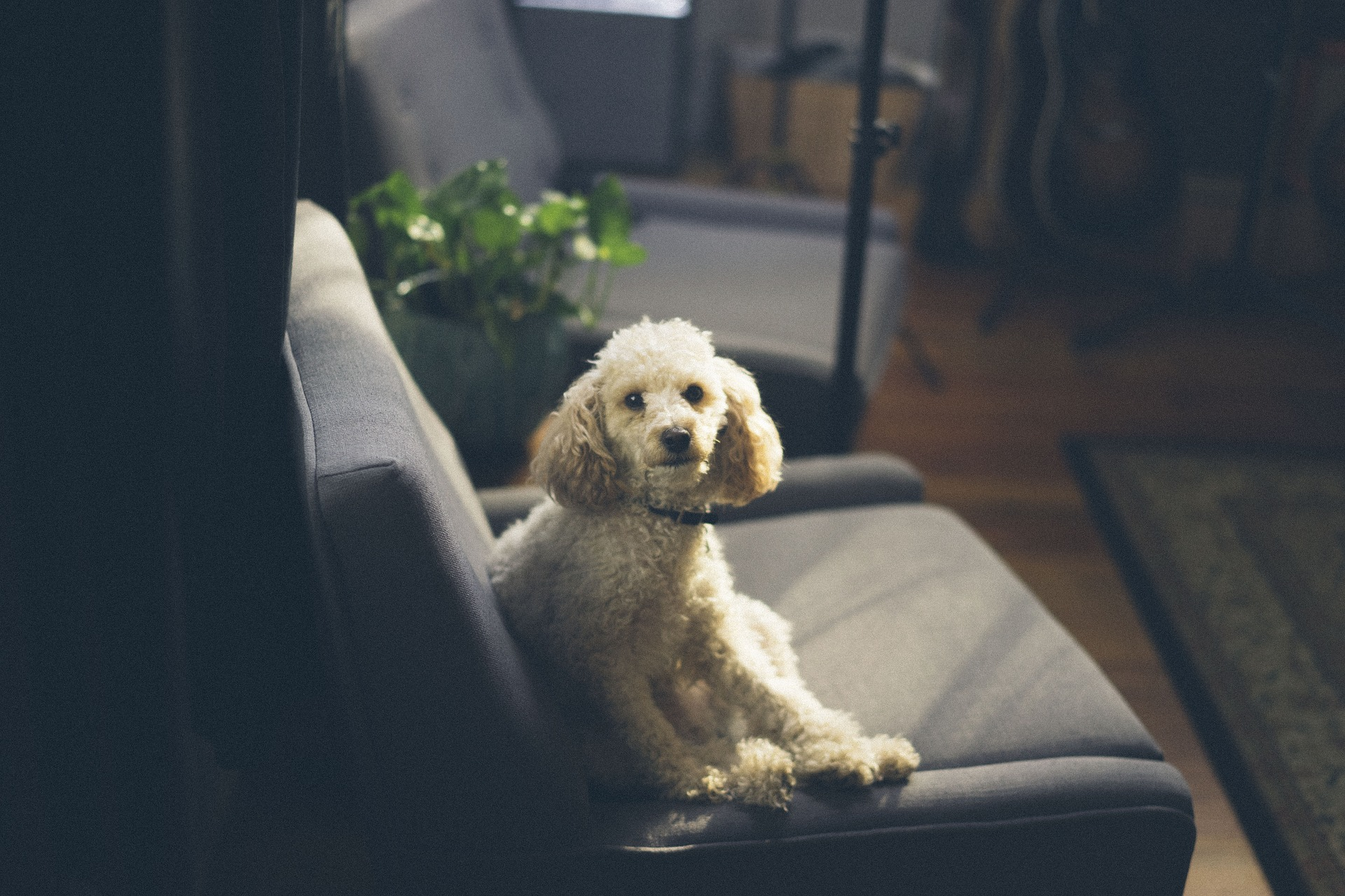 indoor pollution and dogs