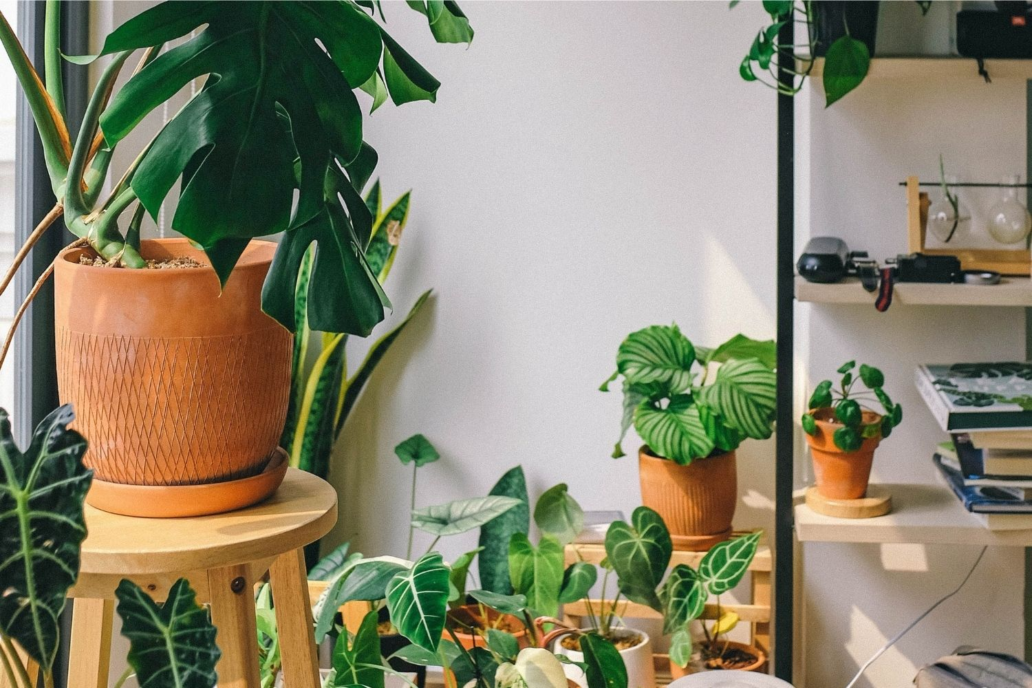 10 Houseplants That Are Poisonous to Your Dog -- And Safe Alternatives
