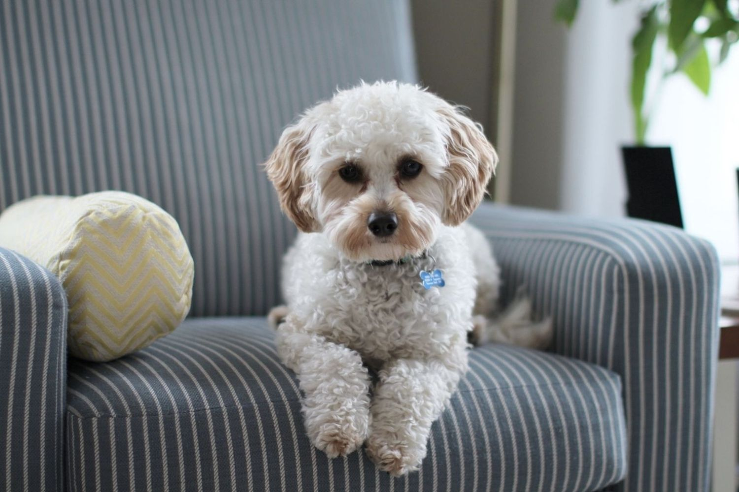 Indoor Air Pollution and Dogs: The Dangers and What You Can Do