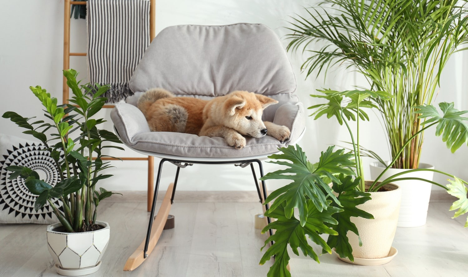 10 Houseplants That Are Poisonous to Your Dog — And Safe Alternatives