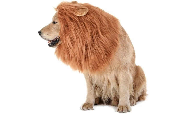 Lion Dog Halloween Costumes Joe Exotic the Lion